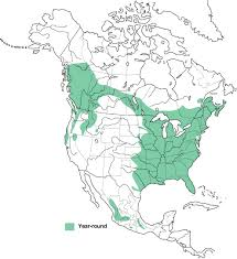Barred owl range map,  from Birds of North America Online.