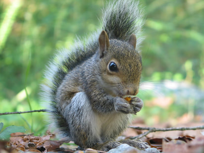 squirrels animals and english