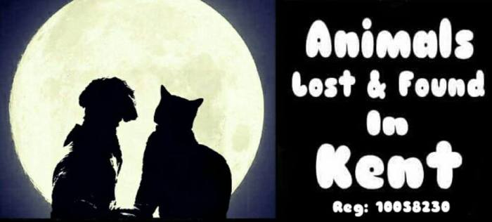 animals lost kent, dog lost kent, car lost kent, cat found kent, animal charity kent,