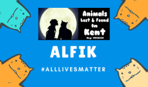 all lives matter, dog lost, cat lost, lost dog kent, lost cat kent,