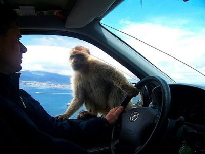Welcome Committee member in Gibraltar, doing his job.