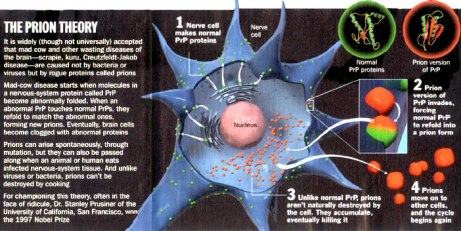 Progression of prion diseases