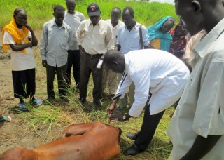 Training of community-based animal health workers - Upper Nile State, South Sudan Charles Hoots