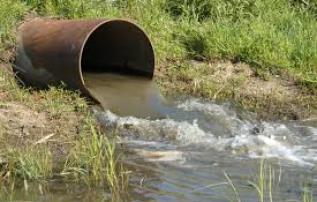 Wastewater discharge into wetlands alters temperature, salinity, pH, and other characteristics that can precipitate avian botulism die-offs.