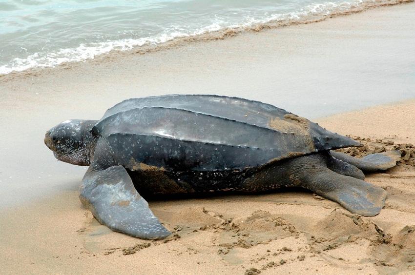 leatherback sea turtle food web diagram s13 sr20det maf wiring
