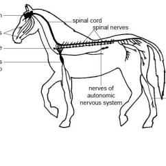 Avian Anatomy Diagram Labeled Nissan Patrol Stereo Wiring Mammals - Facts, Characteristics, And Pictures