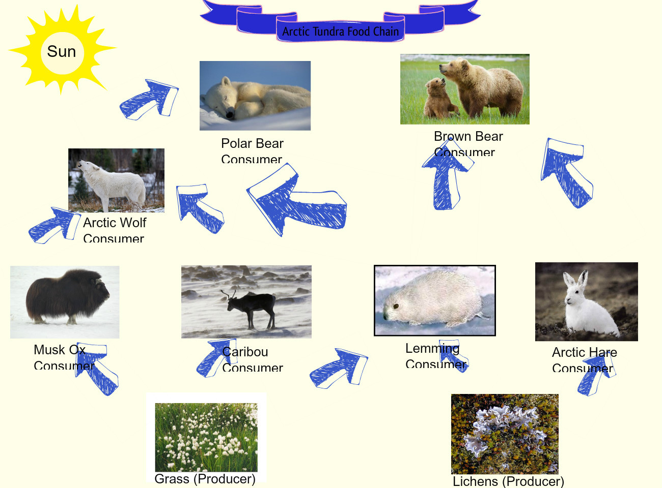 arctic fox food chain diagram structure of hydra tundra animal list facts adaptations pictures