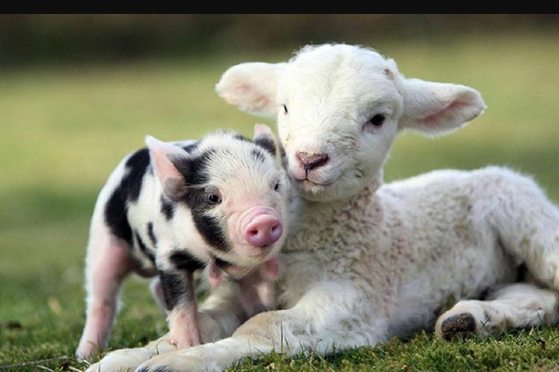 farm animals list facts