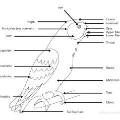 Bird Bone Structure Diagram Feynman Techniques In Condensed Matter Physics Birds Video Gallery Black Robin Kakapo Laysan