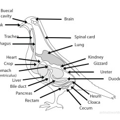 Bird Of Internal Organ Diagram 2 Wire Inter System 27td7 Birds Video Gallery Black Robin Kakapo Laysan