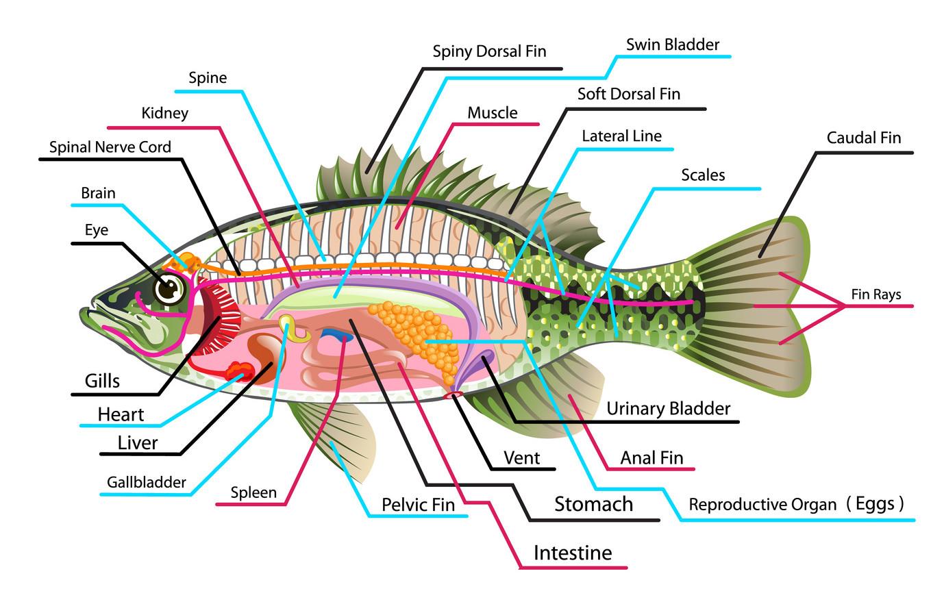 hight resolution of internal anatomy