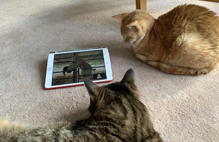 Asia & Cannelle looking at IPad