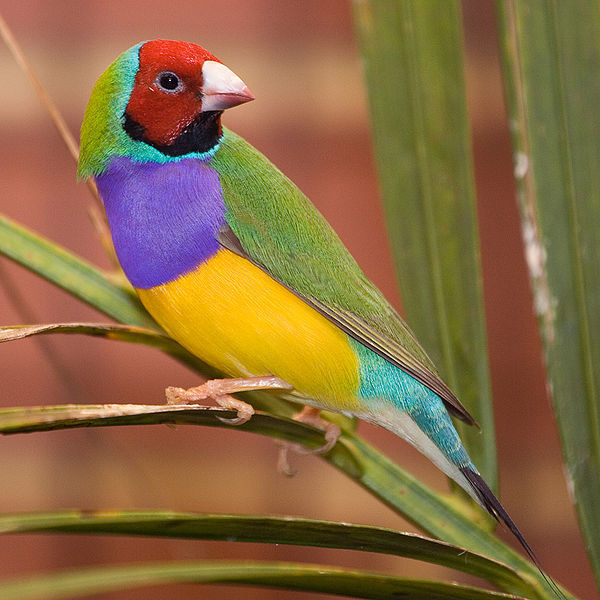 Most of the world's species remain undiscovered by science. 10 Rainforest Birds That Will Delight Your Eyes Animaltia