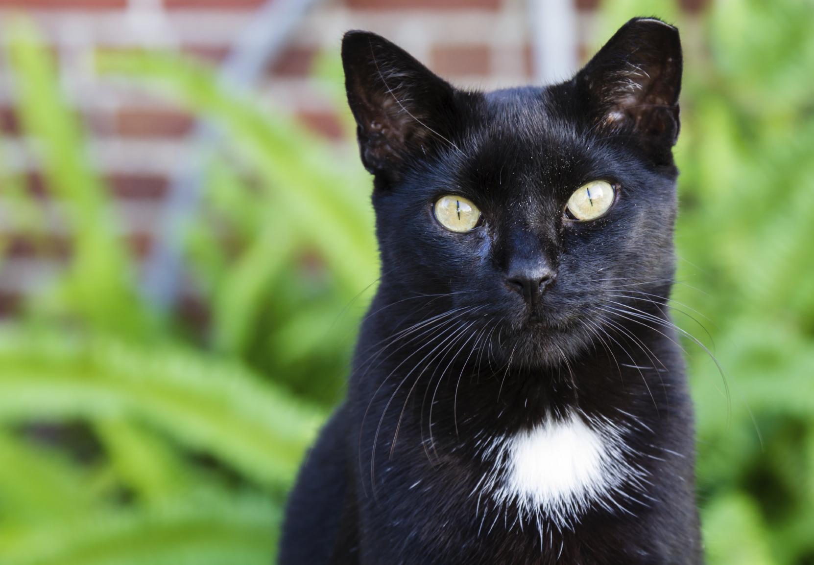 Black Cat Services