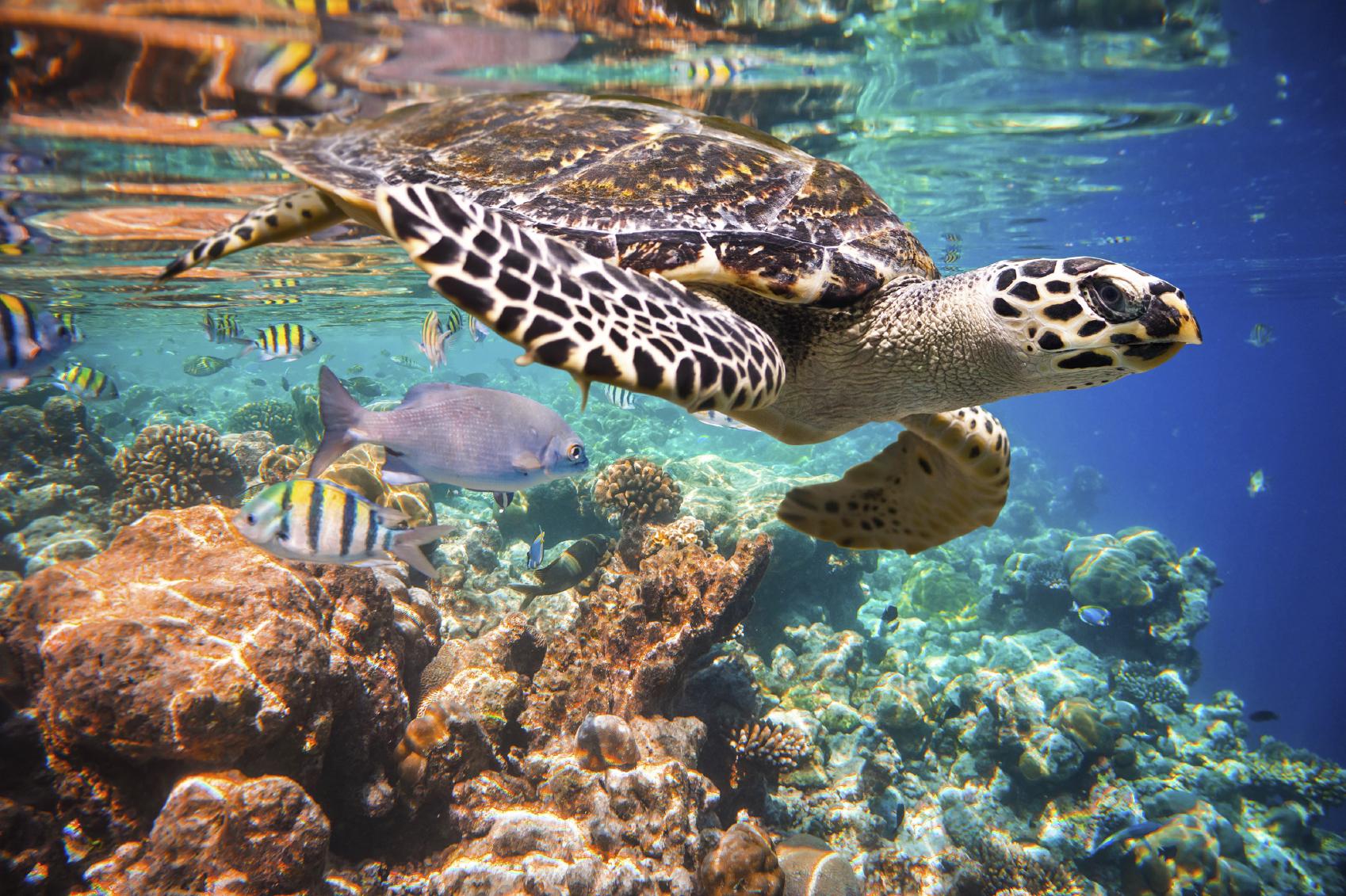 Vilamendhoo Island Resort Spa Reviews