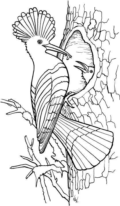 Coloring Pages Birds: Animated Images, Gifs, Pictures