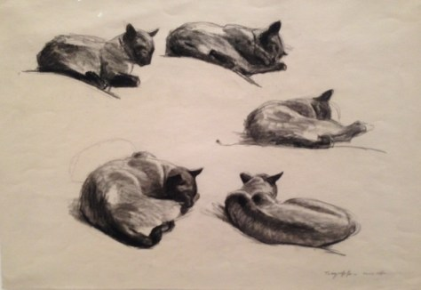Hopper+cats