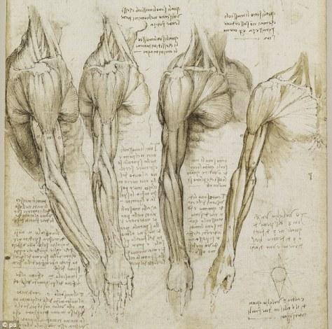 Leonardo_Anatomy