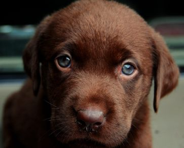 about puppy s eyes
