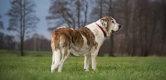 Comment empêcher mon chien de grossir ?