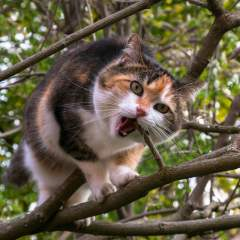 Arbre chat ou simple griffoir, que choisir ?