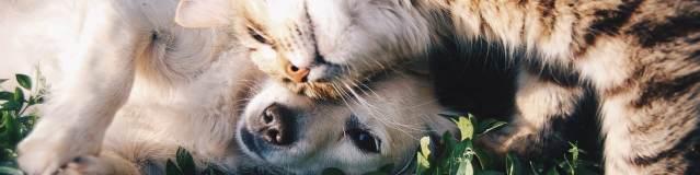 2 des solutions pour faire garder son chien ou son chat en toute sérénité