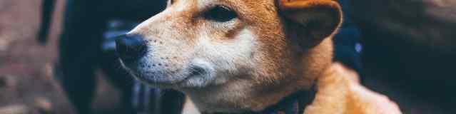 Comment choisir et entretenir son animal de compagnie?