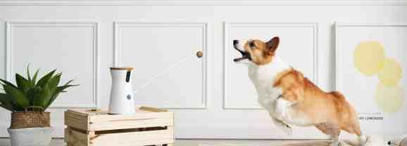 Restez toujours connecté à votre chien avec la Caméra Furbo Dog