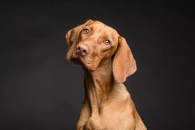 8 conseils pour remonter le moral des animaux domestiques déprimés