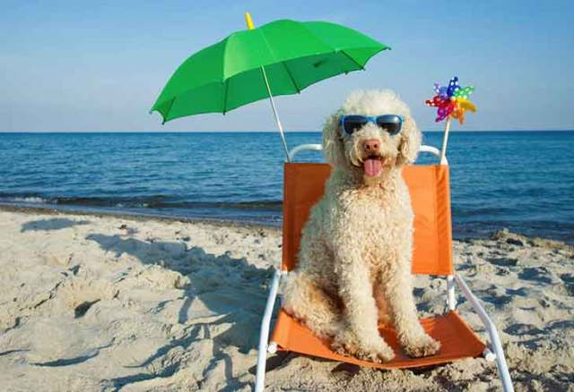 Conseils - Les animaux de compagnie à la plage