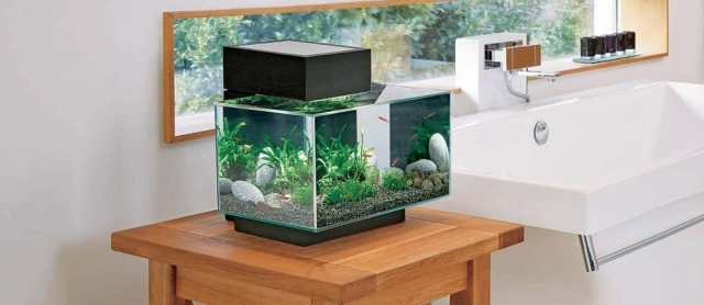 Comment entretenir son aquarium