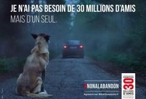 30 millions d'amis vient en aide aux animaux abandonnés de l'été