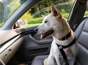 Comment préparer l'arrivée à la maison de votre chien ?