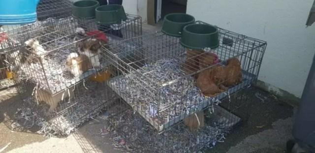 La SPA de Mulhouse lance une pétition contre le trafic d'animaux de compagnie