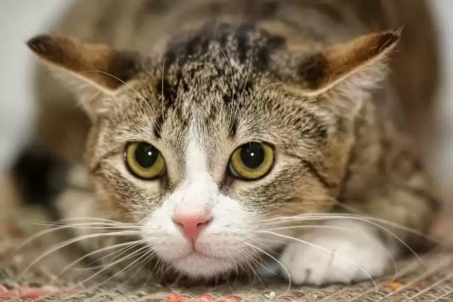 Comment empêcher un chat de fuguer ?