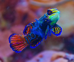 Cute Algae Wallpaper Cold Water Versus Tropical Fish 5 Things To Think About