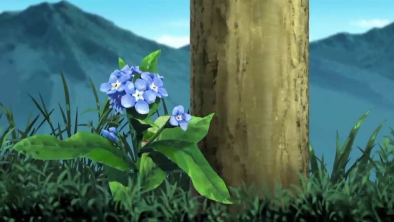 a forget-me-not flower growing next to a post