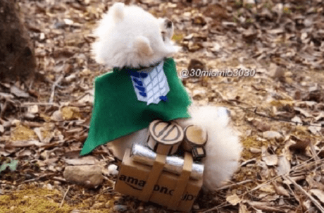 Attack on Pomeranian 003