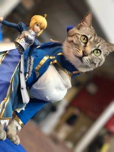 cosplay-cat3