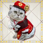 Pet Cat Clothes Hat Game Genshin Impact Venti Klee Cosplay Costume Anime Project