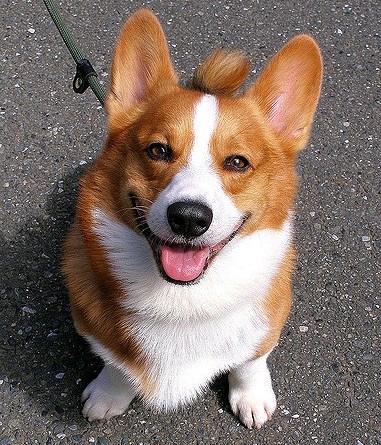 chien (7)