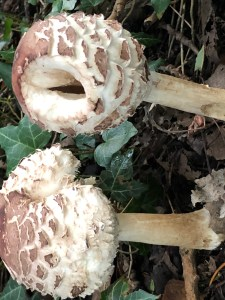 outdoor play when it's cold or wet: picture of mushrooms in the woods