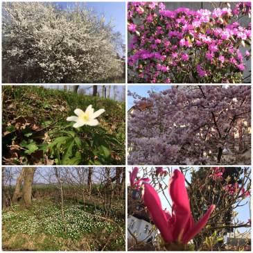 Frühling - er ist tatsächlich da!