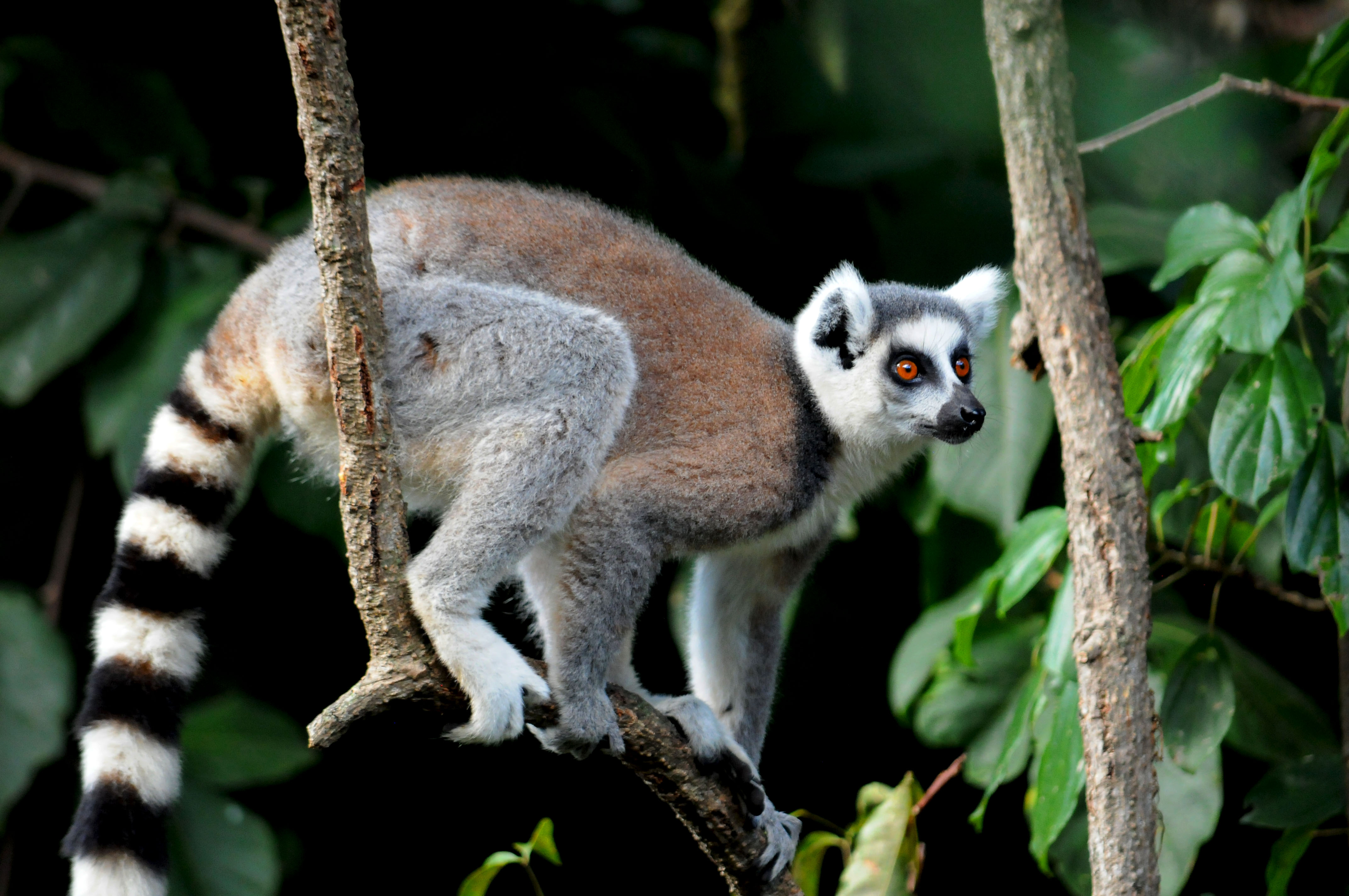 Anjci All Over | What you may not know about Madagascar