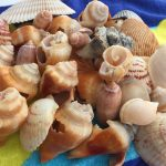 pensacola beach, shells, ocean, sea, waves, santa rosa island, florida