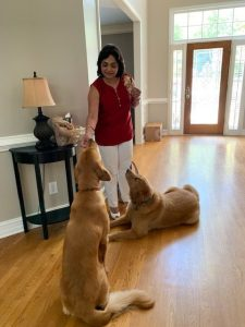 Anju Gattani, golden retrievers, podcast recording, diwali, Indian