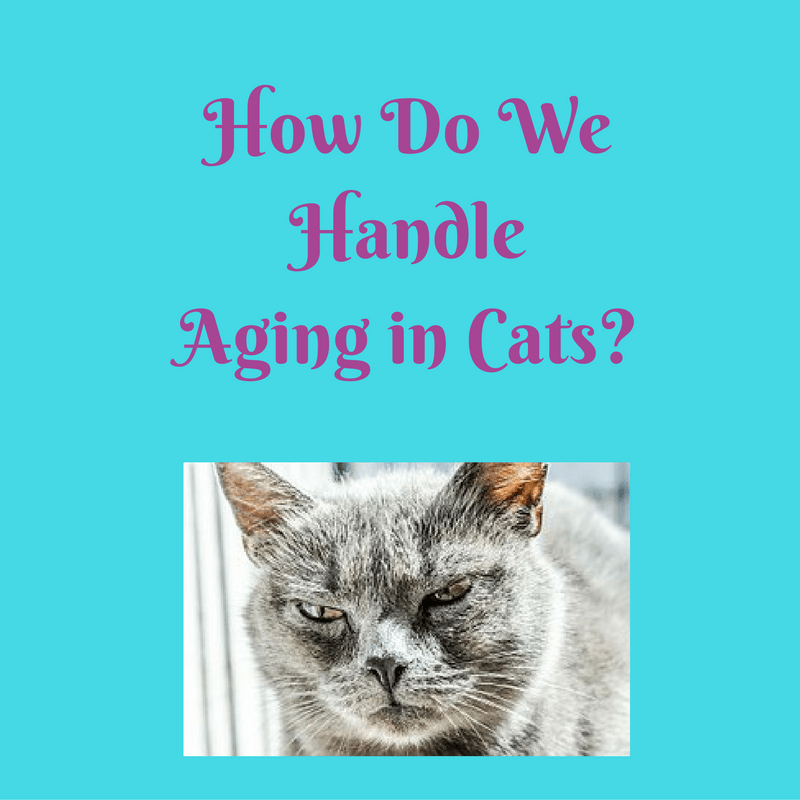aging in cats