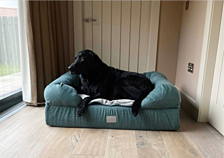 ALFIE & LU DOG BED: from post Top products for Dogs because we do love to spoil them.