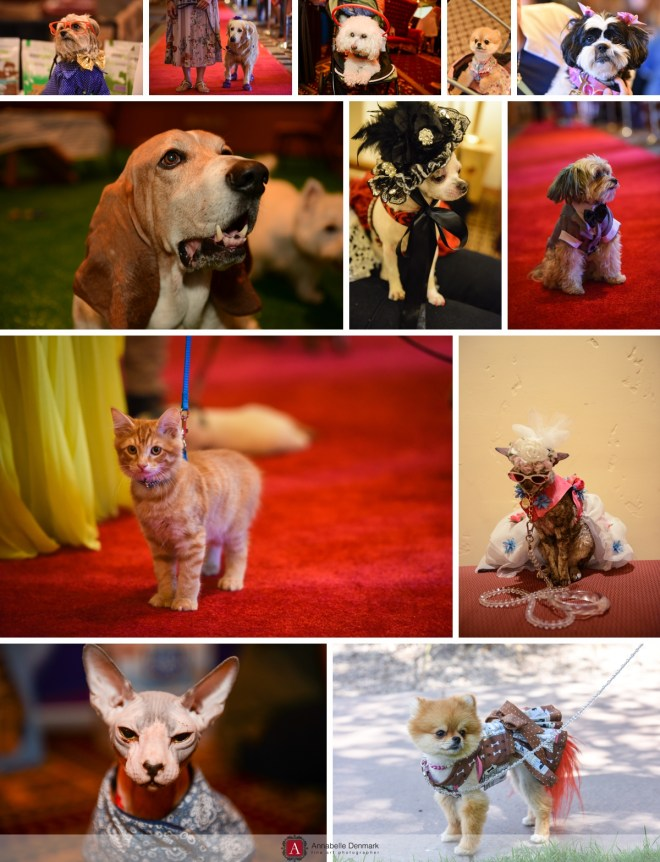 Dogs and Cats fashion