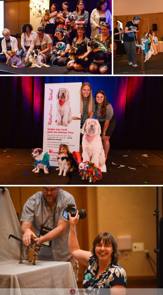 Events and Classes at BlogPaws